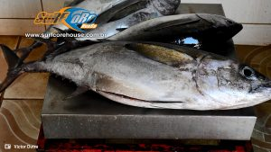 Mercado de Peixe